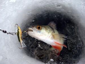 Зимняя рыбалка в Ярославской области